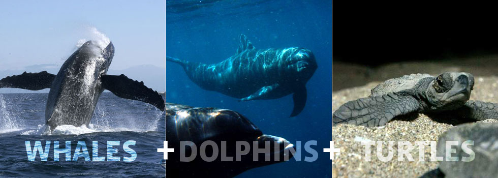 whales_dolphins_turtles