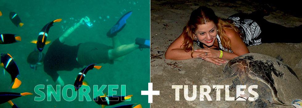 snorkel_turtles