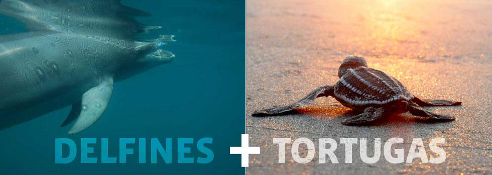 delfines_tortugas